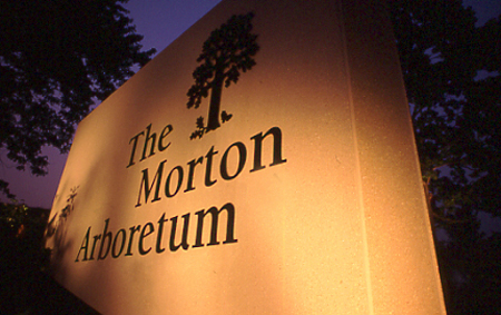 The Morton Arboretum stone sign at night but lit from below